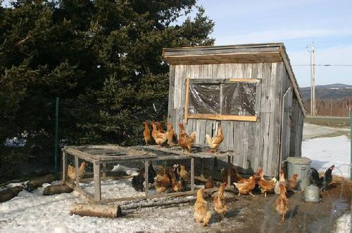 Home made chicken coop