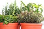 herbs-n-pots