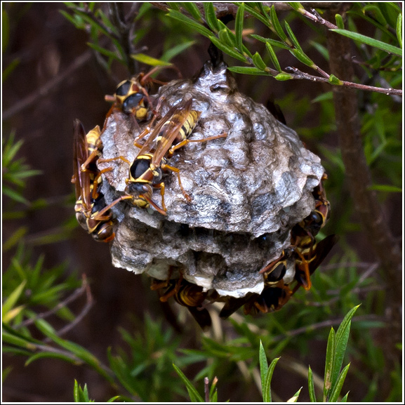 wasp-nest | Town & Country Gardening