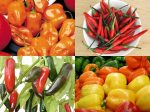 4-types-of-peppers