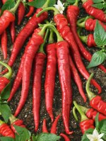 hot-red-pepper