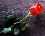 lone-rose
