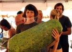 giant cucumber