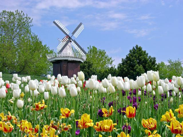 Holland Tulip Festival_ Michigan