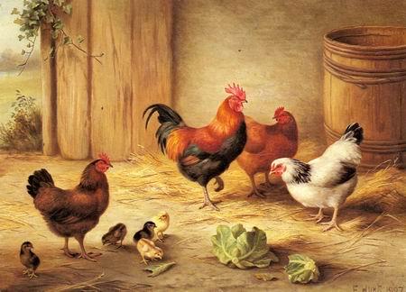barn yard chickens
