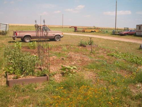 2012 new garden plot