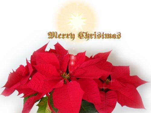 christmas--card