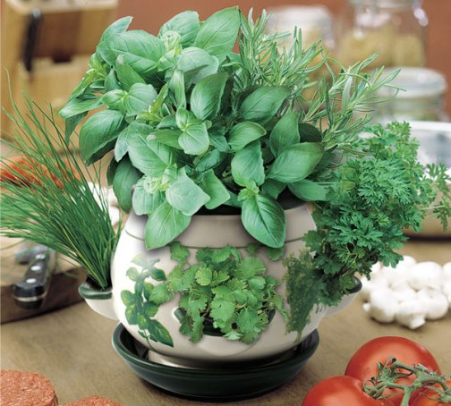 indoor-herb-pot | Town & Country Gardening