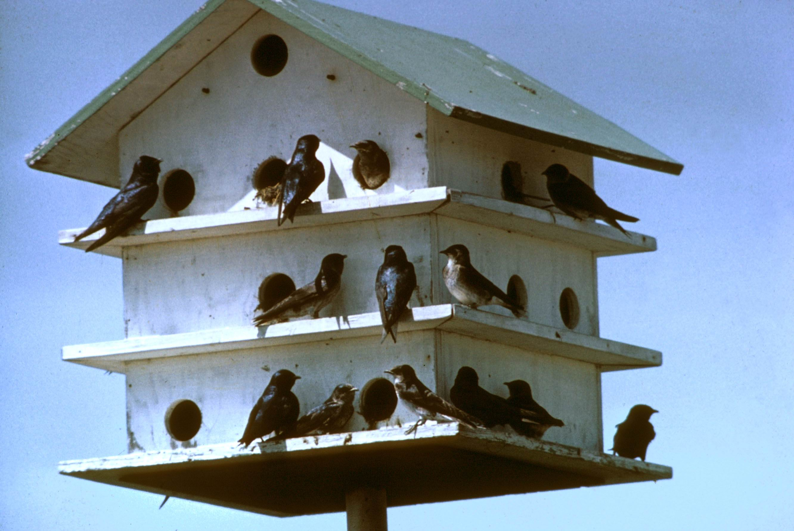 purple-martin-bird-house | Town & Country Gardening