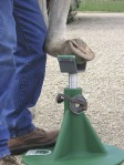 hoof trimming stand
