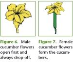 2017-02-03-18_40_03-ez-gardening-e-507_cucumbers-pdf
